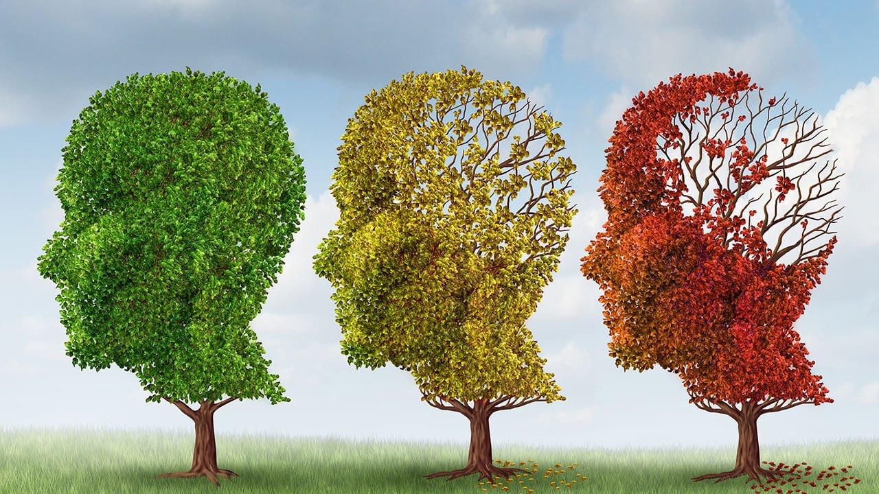 Angela Obermaier Naturheilpraxis | Alzheimer-Therapie nach Nehls (ATnN)